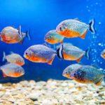 Nano Aquarium Luftpumpe