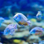 Unterwasserbeleuchtung für das Aquarium