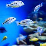 Nano Aquarium CO2 Anlage