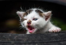 Katze niest