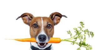 Leber Diät Hund