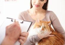 Ohrmilben bei Katzen erkennen