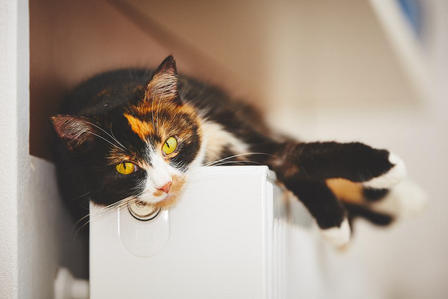 Rolligkeit bei Katzen