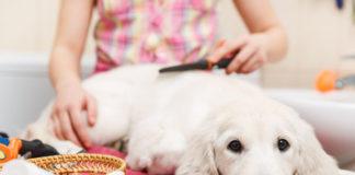 Fellwechsel bei Hunden