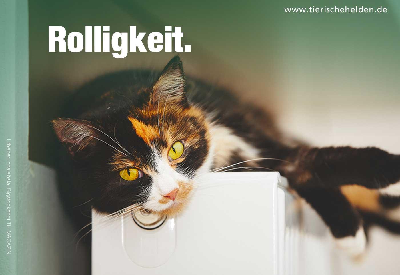 Rolligkeit bei der Katze