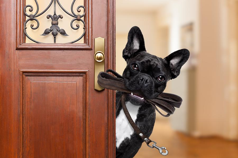 Hunderassen Für Die Wohnung
