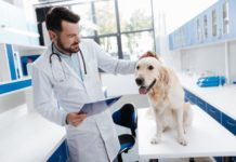 Rheuma bei Hunden Symptome