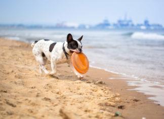 Insel Usedom mit Hund