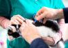 Katzen Chippen lassen