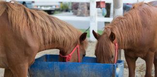 Wie oft füttert man ein Pferd