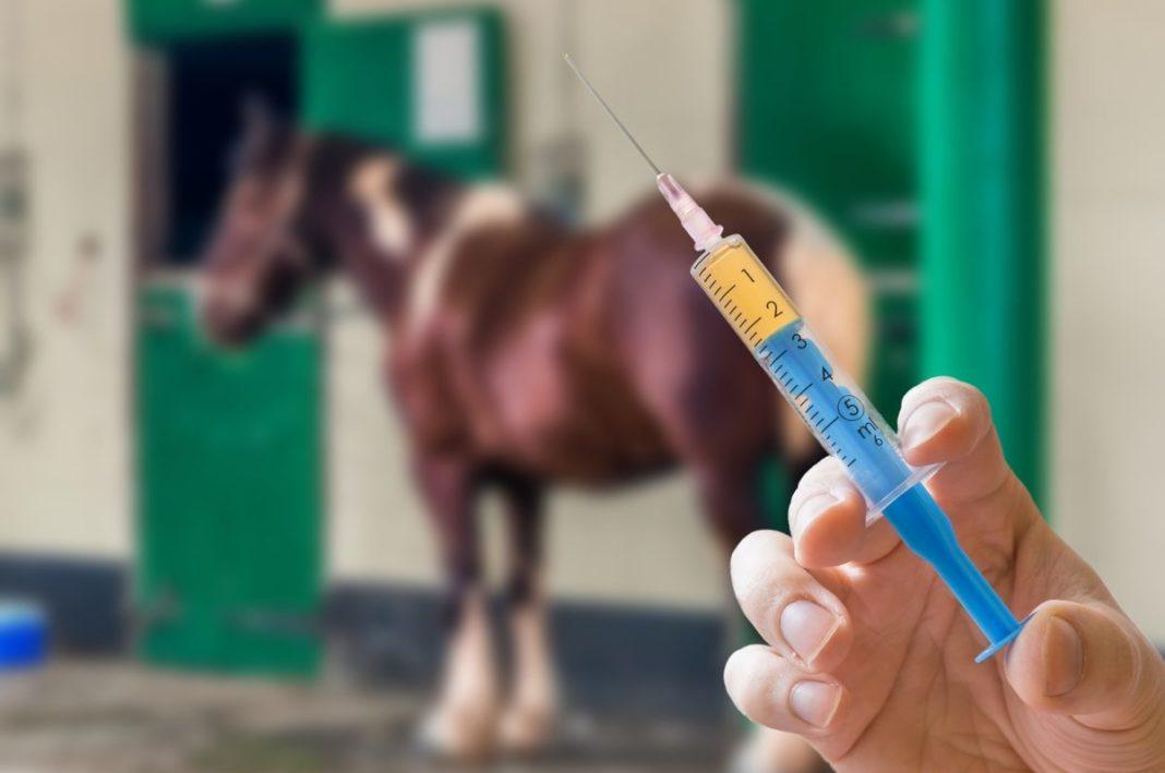 Pferde impfen lassen