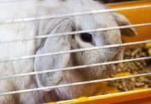 Wie oft soll der Kaninchen Käfig oder Stall sauber machen