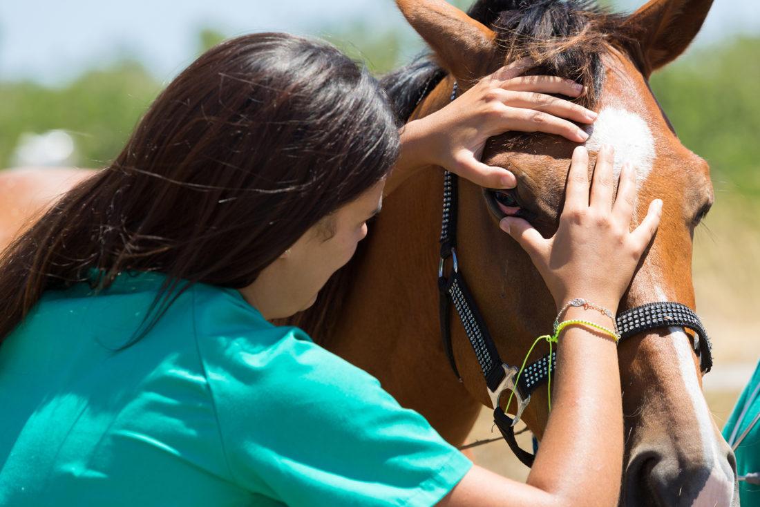 Lungenenzündung Symptome pferd