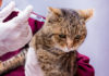 Wie oft Katze impfen