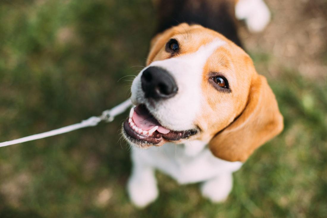 Wann werden Hunde geschlechtsreif