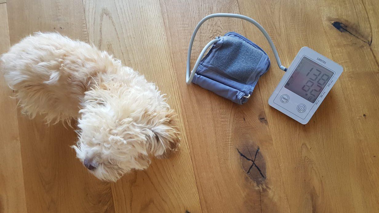 Blutdruckmessung beim Hund