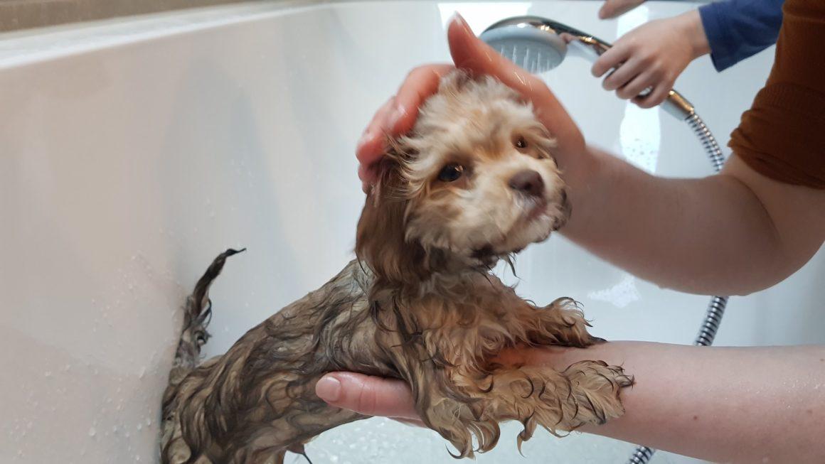 Hunde waschen