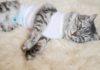 Katze kastrieren wann