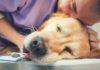 Alter Hund beim Tierarzt