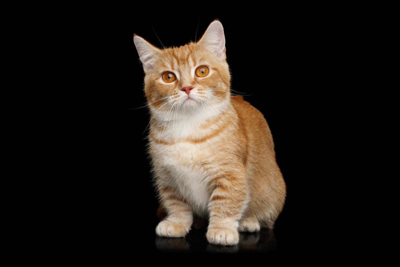 kleinste Katze