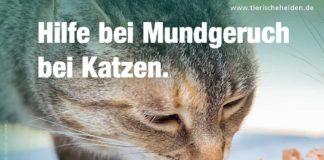Mundgeruch bei Katzen durch Nahrung oder Erkrankungen