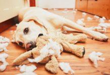Hund allein zuhause