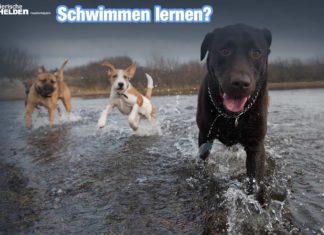 Mein Hund kann nicht schwimmen