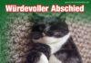 Katze ist gestorben