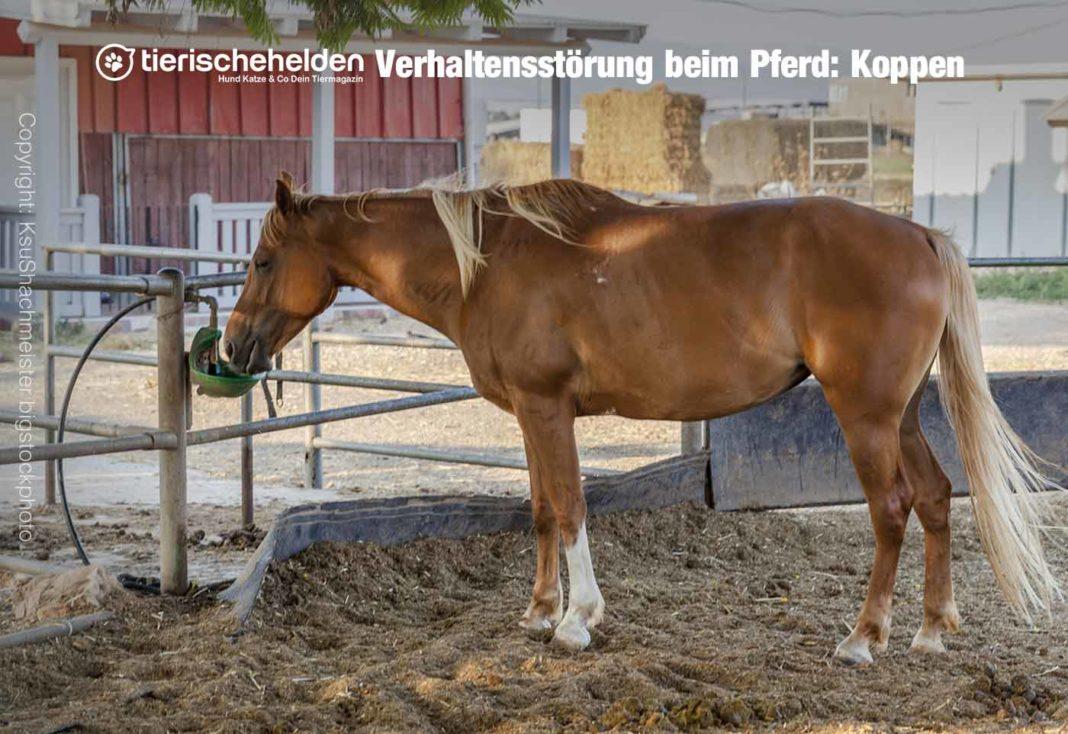 Pferd Koppen Störung