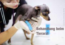 Was tun, wenn der Hund/Welpe humpelt?