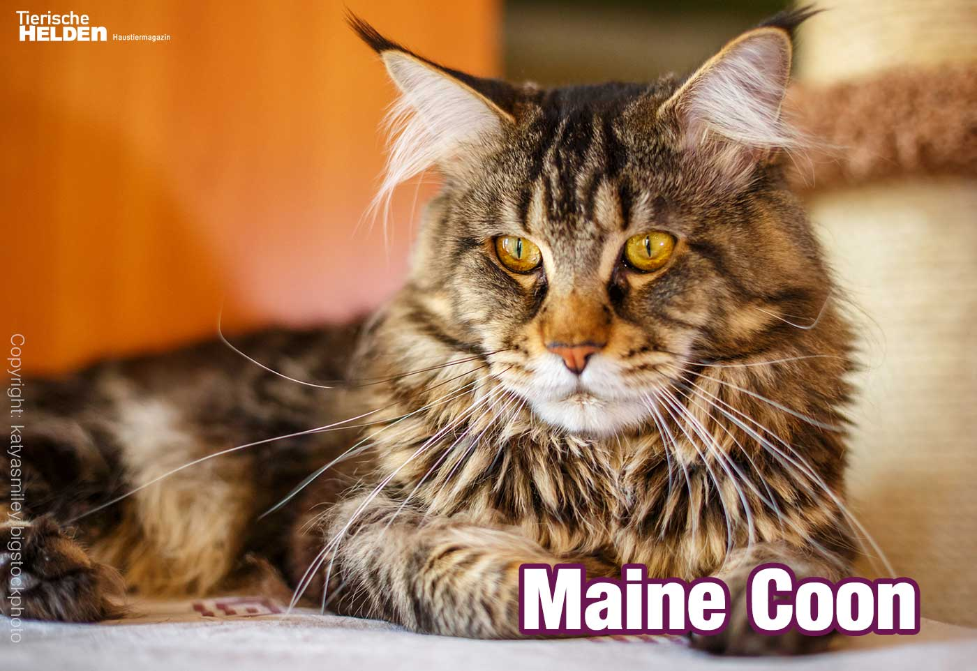 Main Conn Katzen
