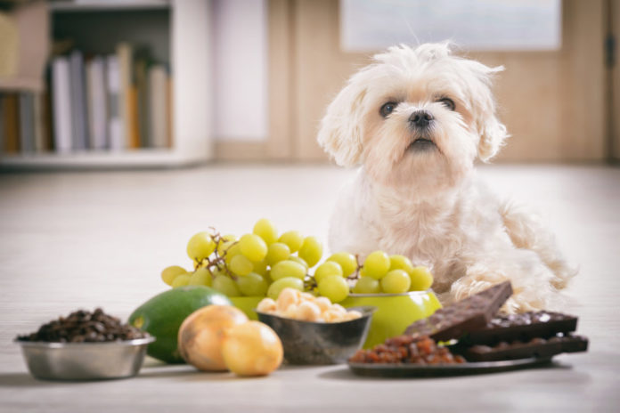 Was ist für Hunde giftig