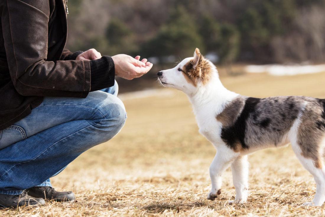 Hund richtig belohnen