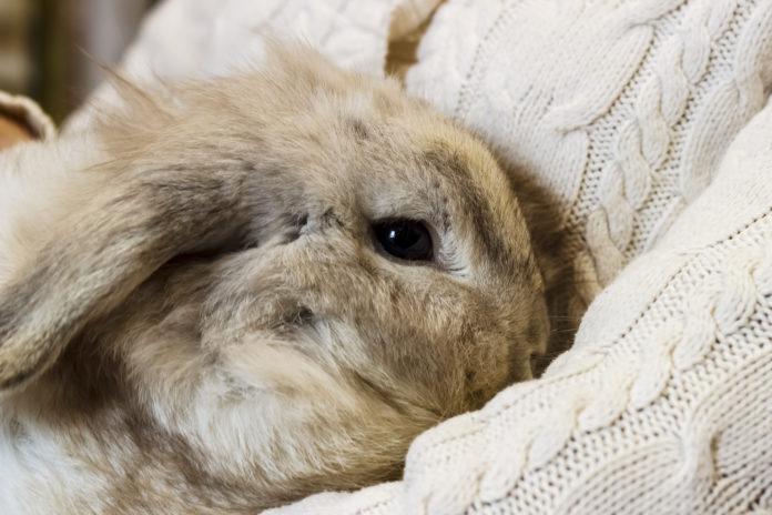 Was tun bei Durchfall bei Kaninchen?