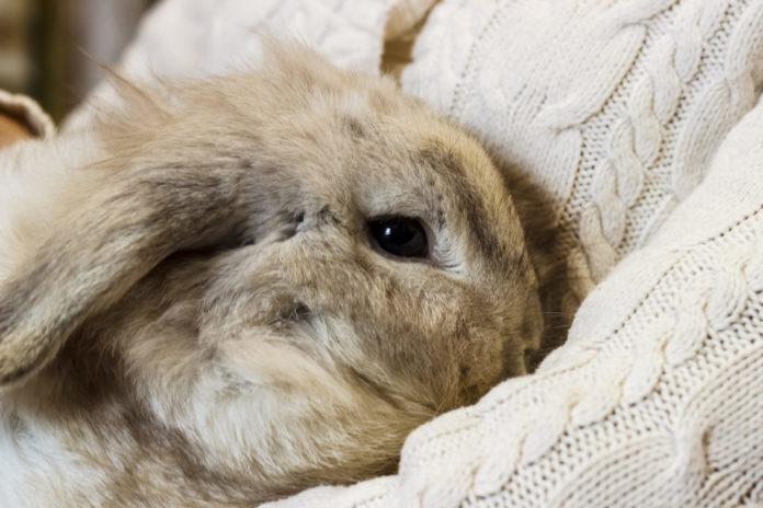 durchfall bei kaninchen symptome und behandlung tierischehelden. Black Bedroom Furniture Sets. Home Design Ideas
