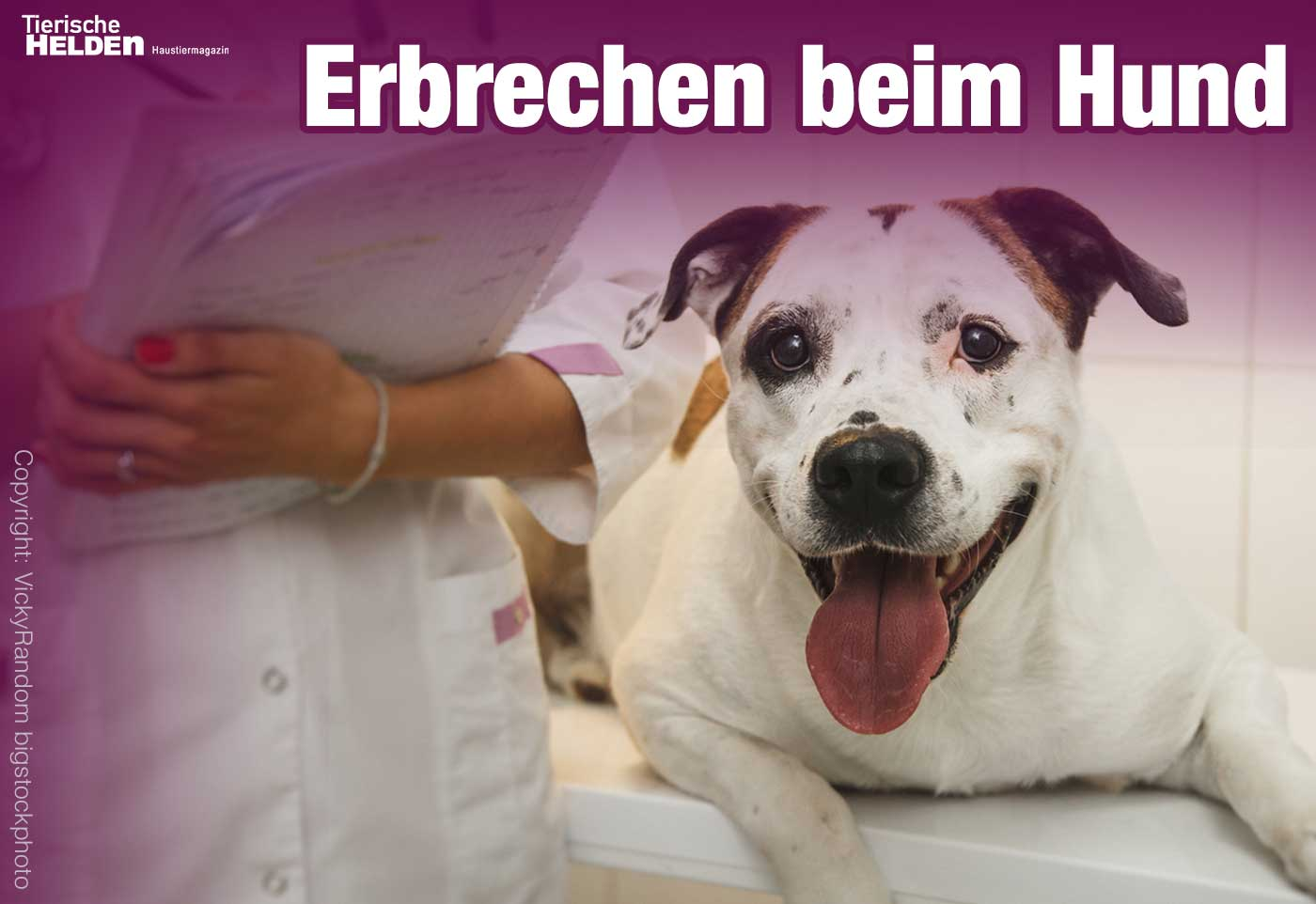 Hund erbricht gelben Schleim