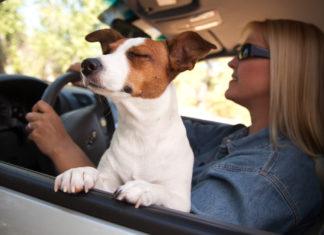 Autofahren mit dem Hund