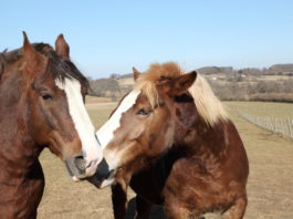 giftige Pflanzen für Pferde