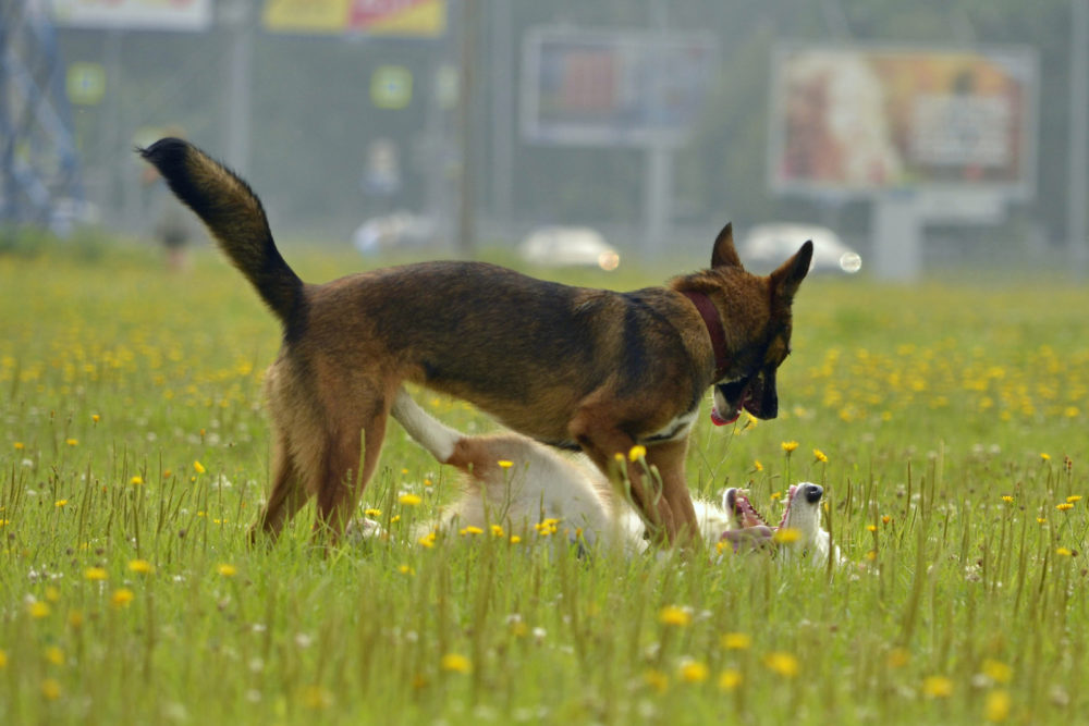 Rufen des Hundes