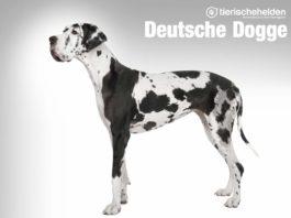 Deutsche Dogge