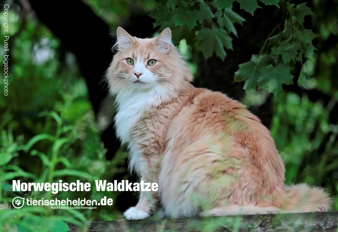 Waldkatze