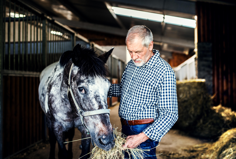 Kraftfutter für Pferde