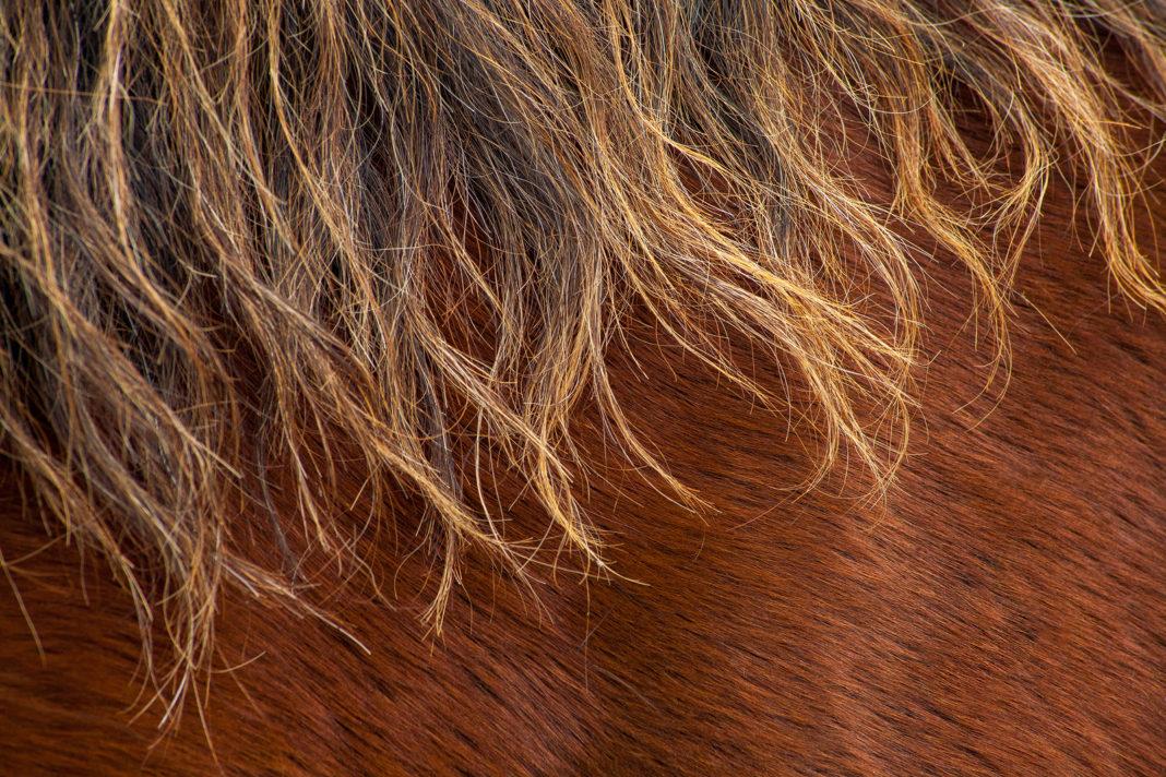 Haarlinge