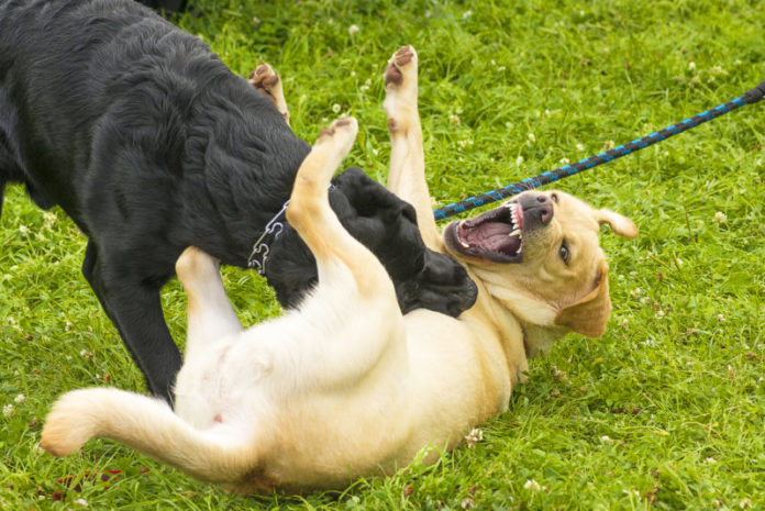 Hund abwehren