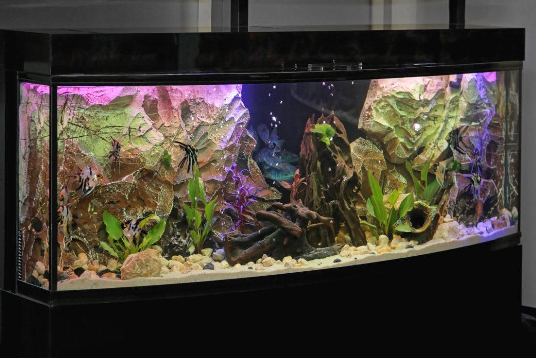 aquarium wasser hart