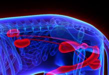 Nieren und urologisches System beim Hund
