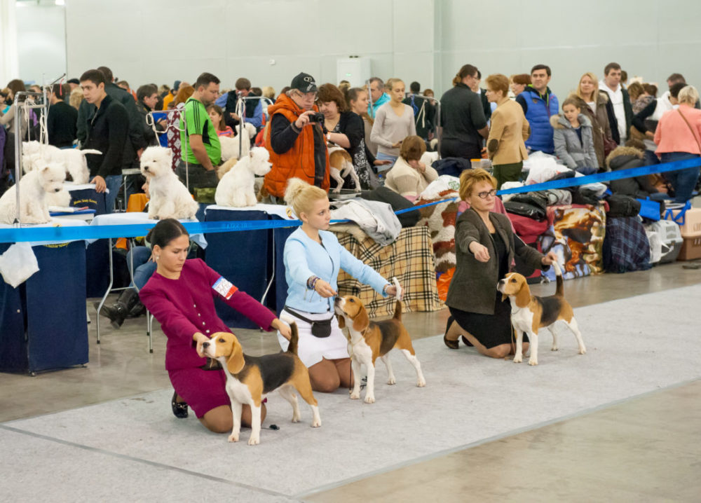 FCI Gruppen der Hunde Bewertung