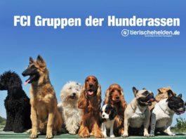 FCI Gruppen der Hunderassen