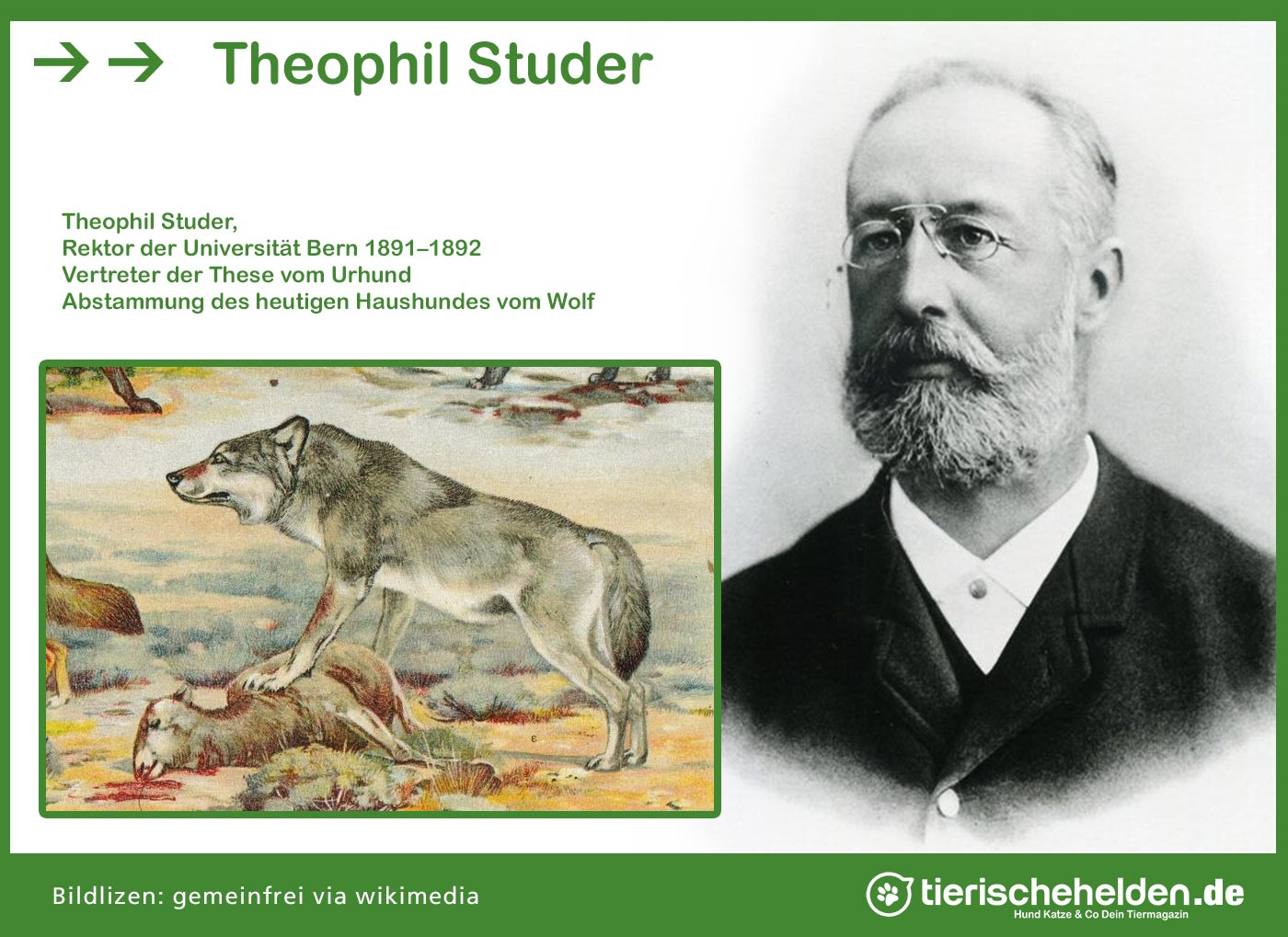 Theophil Studer