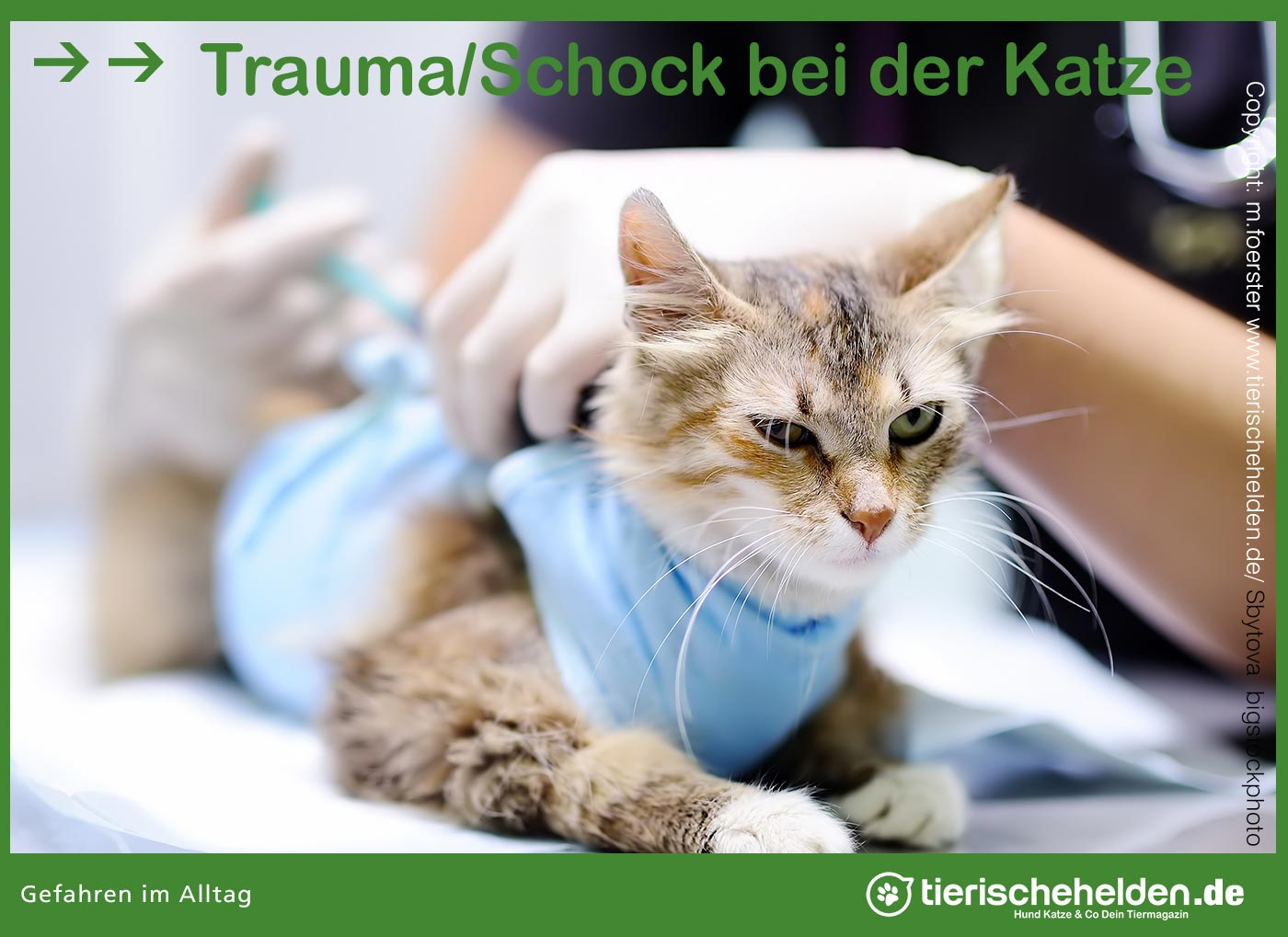 Traumatisierte Katze